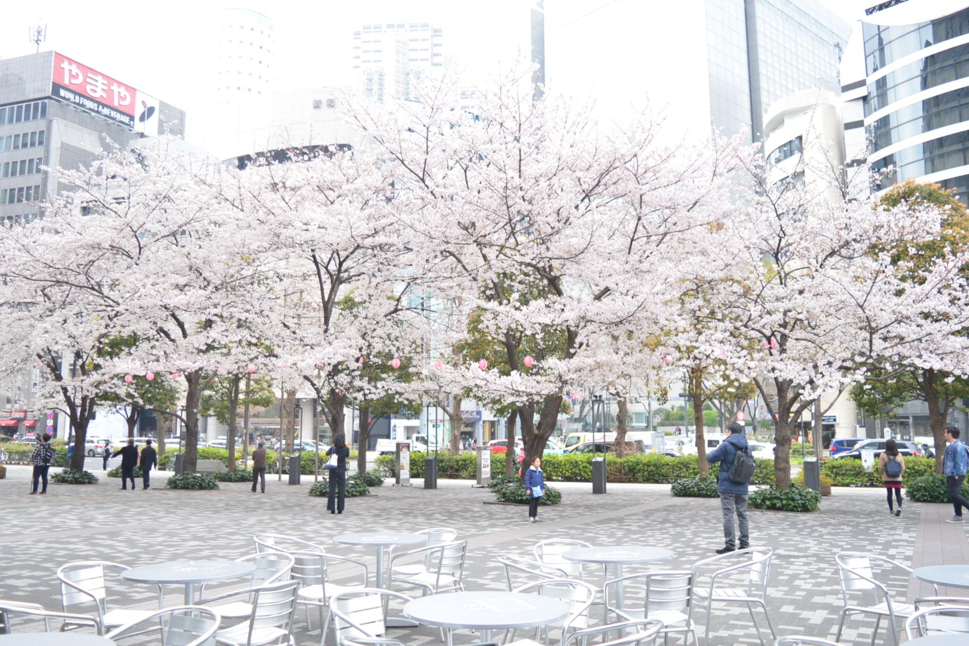 2.外席と桜-min
