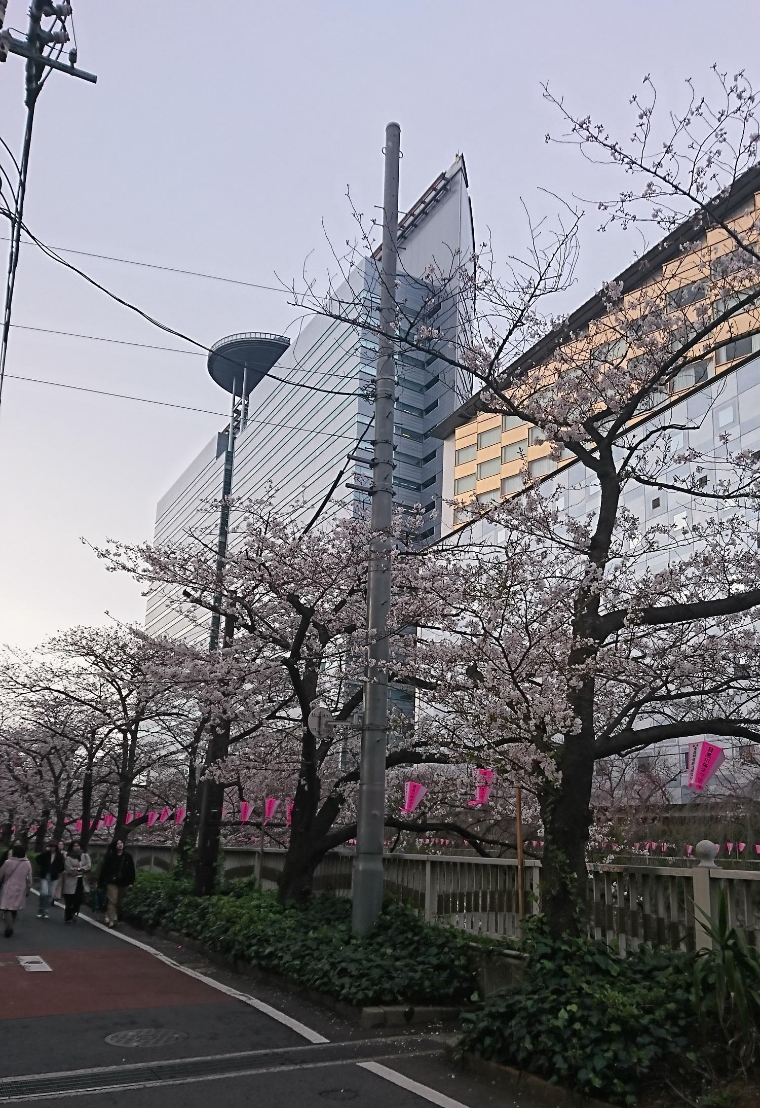 写真1-2_昨年の桜-d