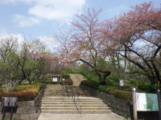 羽根木公園②
